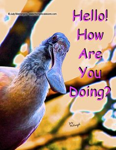 Hello! How Are You Doing?