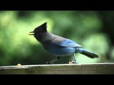 Bird eating peanuts - what if it was an 8-bit game