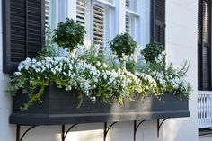 Beautiful and Blooming Window Boxes of Charleston We spent a long weekend with friends in Charleston, South Carolina enjoying some food & fun. We park the car once we arrive, walking to our destinations and dinner. Charleston is a foodie's par… Window Planter Boxes, Planter Ideas, Fall Window Boxes, Window Box Diy, Long Planter Boxes, Window Box Brackets, Metal Window Boxes, Window Ideas, Window Box Flowers