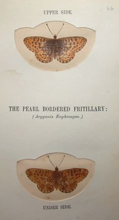 Natural History, Creation and Religious Conflicts: Nature Printing. Butterflying with the Poets, 1864