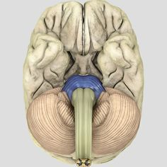 1000+ images about Brain Zoom Out on Pinterest | The brain ...