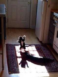 Look at mah shadow