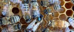 How to set up and keep bees