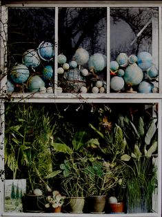 Billy and Hells  - cacti + globes, globes + cacti