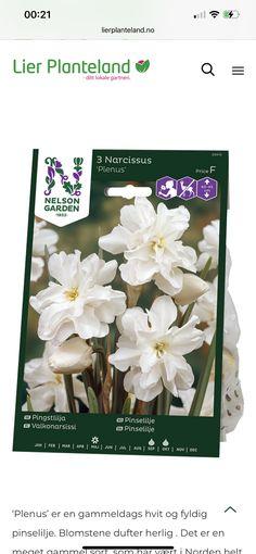 Planters, Pandora, Plant, Window Boxes, Pot Holders, Flower Planters, Pots