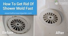 How To Remove Mold From The Shower – Quickly and Easily