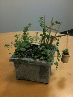 tiny garden by cygnoir, via Flickr