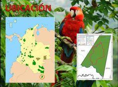 PARQUE NATURAL EN LA AMAZONÍA COLOMBIANA