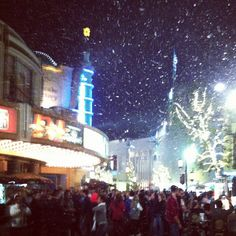 Snowing at the grove. Glad I don't have to drive in it this year... http://instagr.am/p/S3--soCT_-/