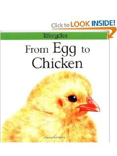 From Egg to Chicken (Lifecycles): Gerald Legg, Carolyn Scrace: 9780531153338: Amazon.com: Books
