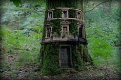 "A tree house, a free house, A secret you and me house, A high up in the leafy branches Cozy as can be house. A street house, a neat house, Be sure and wipe your feet house Is not my kind of house at all– Let's go live in a tree house. "" "" -Shel..."