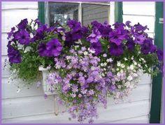 Best Small Yard Landscaping & Flower Garden Design Ideas - New ideas Window Planters, Flower Planters, Window Box Plants, Fall Planters, Hanging Planters, Hanging Baskets, Window Box Flowers, Outdoor Flowers, Outdoor Plants