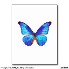 """The post card """"of Morpho"""", No.01"""