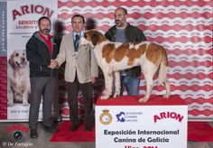 Exposición Internacional Canina de Galicia, Vigo, enero 2014. #exposicioncanina #vigo