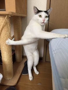 Wで爪が引っかかってしまった猫、コラの餌食にwwwwwwwww