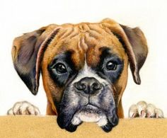 """See more Boxer Art (& other Breeds) on NukiMo's Board """"Artsy Fartsy"""" Sub-Board """"Dawg Art"""" (NOT a Sales Board! Dog Photos, Dog Pictures, Painted Rock Animals, Boxer And Baby, Boxer Puppies, Pet Rocks, Dog Portraits, Pictures To Paint, Animal Paintings"""
