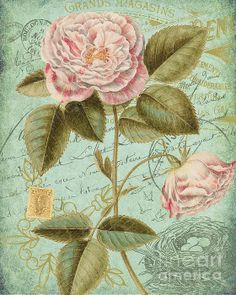 Roses and French Ephemera Greeting Card by Traci Vanover