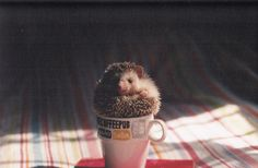#hedgehog #cute #cup #mug #sweet