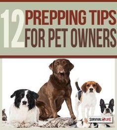 Survival Tips: Prepping with Pets | Smart Survival Planning & Emergency Preparedness Guide For Your Pets When SHTF By Survival Life http://survivallife.com/2015/02/23/survival-tips-prepping-with-pets/