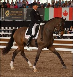 Do You Need A Warmblood To Ride Dressage? Here's How to Decide