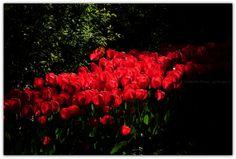 Işığa izin verin, varlığı güzelliğin belirginleşmesidir ...