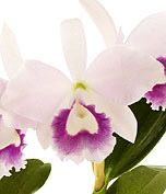 I love orchids.  In the spring I love dressing my home up with the ones that are currently blooming on my patio.