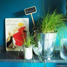 Idées déco : étagères végétales Decoration, Planter Pots, Diy Room Decor, Green, Decor, Decorating, Decorations, Dekoration, Ornament