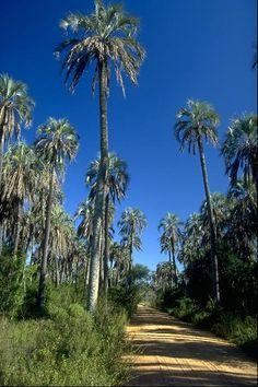Parque nacional El Palmar - Provincia de Entre Rios - Argentina