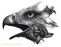 Eagles Morph Art Kingfisher Flying Fox Betta Fish Fine Art Danielle Trudeau