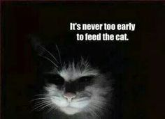 It's never too early to feed the cat.