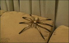 This smug prankster who thinks you need to get over your arachnophobia.