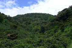 International Coffee Farms