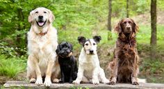 Looking for Dog behaviourist in Manchester - http://www.dog-ramblers.co.uk/