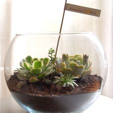 Fishbowl Succulent centerpiece