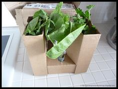 plants in box