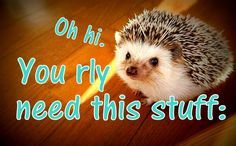 Community Post: 44 Super Cute Products Every Hedgehog Lover Needs