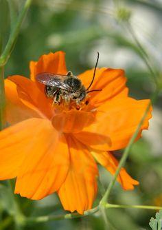beeandflower.jpg By phaewilk