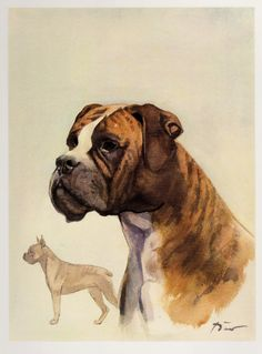 Vintage Boxer Print of a Boxer Use Etsy Coupon Code PINTEREST15 And Save 15 Percent