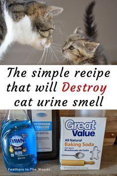 Remove Cat Urine Smell, Cat Pee Smell, Cat Urine Smells, Remove Stains, Cleaning Pet Urine, Pet Urine Cleaner, Cat Urine Remover, Pet Odors, Pet Care