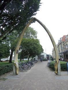 Schiermonnikoog, poort van een walviskaak