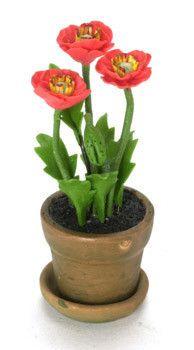 Red Poppy in Pot  Price $6.99