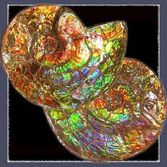"Ammolite the true treasure of nature is the rarest of all gemstones. It is an ""opal like"" organic gemstone that is formed from fossilized extinct mollusks called Ammonites. The colours of gemstone Ammolite can be remarkably iridescent."