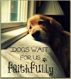 Dogs wait for us faithfully. EVERY day. <3