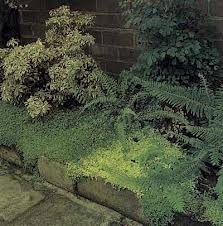 shade gardens - Google Search