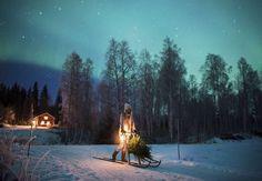 Hon är som en skogsälva mitt i de ångermanländska skogarna. Med vackra fotografier och levande texter trollbinder Jonna Jinton sina bloggläsare.    I...