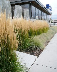 karl foerster & xeriscape - plant native grasses and perennials to save water | Gardens & Landscaping