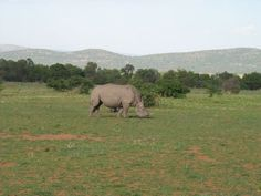 Animals from the Mabula Private Game Lodge in South Africa