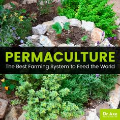 Permaculture - Dr. Axe