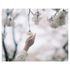 . 叶わない夢があったから 叶う夢があること。 . . ゆたり展 最終日11:00〜19:00 . 最後にLiveします。 来れなかった方も、よかったら見にきてください! #filmphotography #ゆたり展 Flowers Quotes Tumblr, Flower Quotes, Definition Of Aesthetic, Kite Quotes, Quotes White, Aesthetic Photo, Amazing Flowers, Pretty Flowers, Flowers In Hair