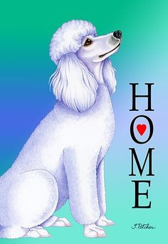 Image result for white Poodle house flags